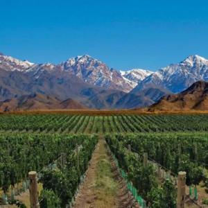 Wijnvelden Argentinië